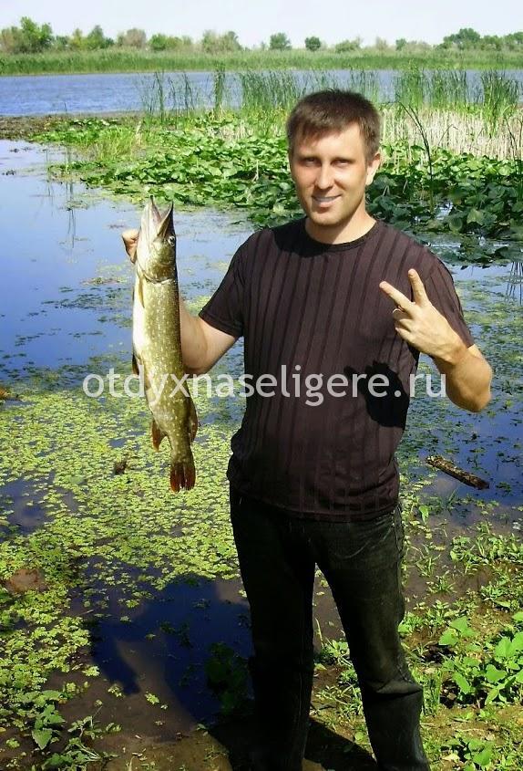 Рыбалка и отдых на селигере